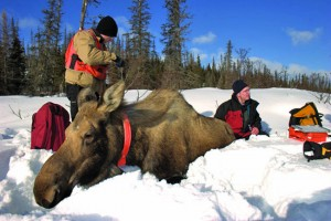 Moose research