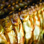 Until circa 1960, smoked alewives were a popular meal during May and June in Maine.