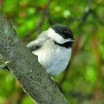 The Acadia Birding Festival is a popular event.