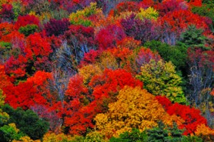 Maine's colorful deciduous forests world famous
