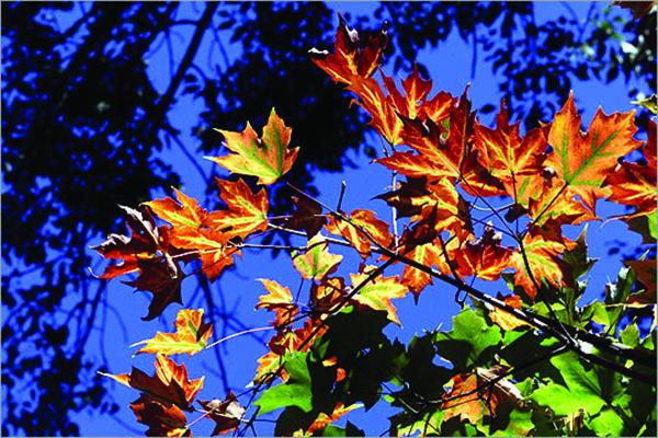 Maine's pellucid September light creates spellbinding photos.