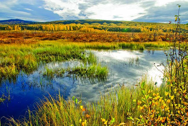 Wetlands are a precious resource