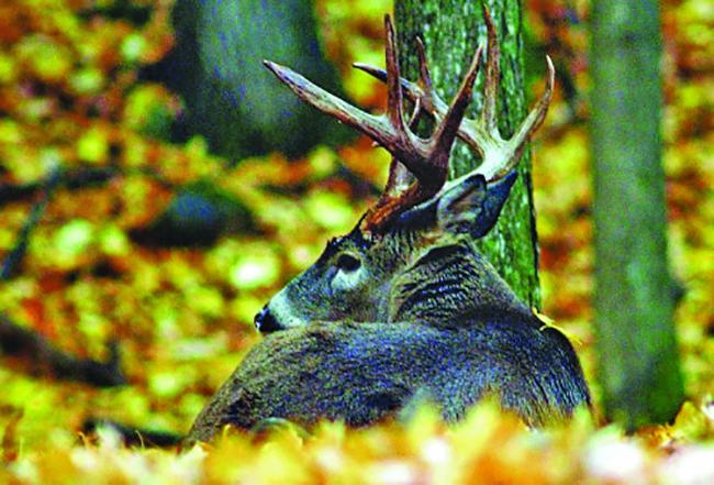 Deer hunting rules in Maine each November