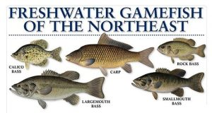 Freshwater Fish Chart
