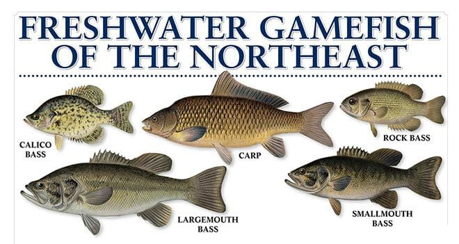 Freshwater fish chart for Maine state fish