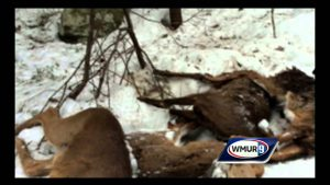Avoid Killing Deer from Feeding Them