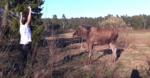Almost Moose Attack